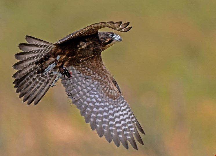 New Wingspan site is now open to visitors